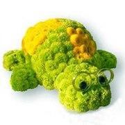 Черепаха из живых цветов